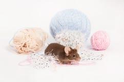 Lustige inländische Maus versteckt sich unter Verwicklungen des Garns Lizenzfreie Stockfotos