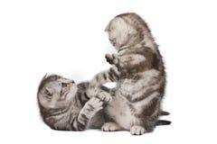 Lustige kämpfende Kätzchen Lizenzfreies Stockfoto