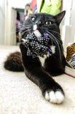 Lustige kühle Katze Stockbild