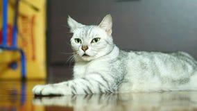 Lustige Katze Stockbilder