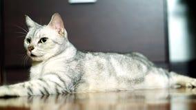 Lustige Katze Lizenzfreies Stockfoto