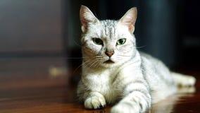 Lustige Katze Stockbild