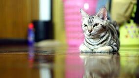 Lustige Katze Stockfotos