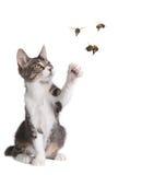 Lustige Katze-anziehende Bienen Lizenzfreies Stockfoto