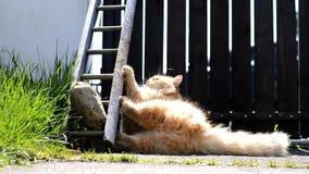 Lustige Katze, die auf dem Garten spielt stock video