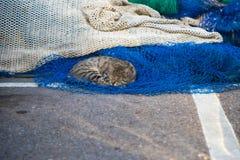 Lustige Katze, die auf Fischernetzen in einem Hafen stillsteht Stockfotografie
