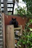 Lustige Katze halten Uhr bevore Hexenhäuschen Stockbilder
