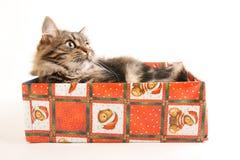 Lustige Katze im Kasten auf Weiß Stockfotos