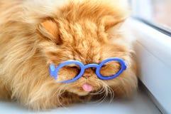 Lustige Katze mit Gläsern Lizenzfreies Stockbild