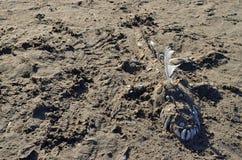 Lustige Krokodilskulptur auf dem Strand Lizenzfreies Stockfoto