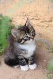 Lustige nette Kätzchenatemzüge Stockfotos