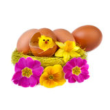 Lustige Osterei-Dekoration mit gelbem Küken und Blumen Lizenzfreie Stockfotografie
