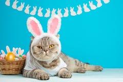 Lustige Osterhasenkatze, nett mit den Ohren und Ostereiern Ostern-Hintergrund und -zusammensetzung