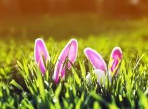 Lustige Ostern-Szene mit einem Paar von Spielzeugkaninchen mit den Ohren und von weißen Ei, das im Frühjahr aus der grünen saftig stockfotos