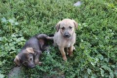 Lustige puppys lizenzfreies stockfoto