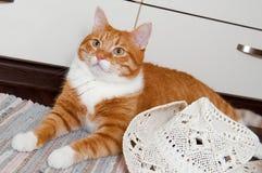 Lustige rote Katze mit weißem Hut lizenzfreie stockbilder