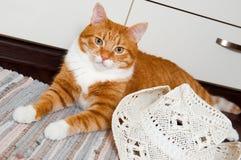 Lustige rote Katze mit weißem Hut stockbild