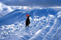 Lustige Santa Penguin Lizenzfreie Stockfotos
