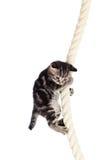 Lustige Schätzchenkatze, die am Seil hängt lizenzfreies stockfoto
