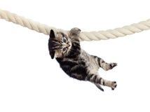 Lustige Schätzchenkatze, die am Seil hängt Lizenzfreie Stockfotografie