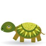 Lustige Schildkröte auf einem weißen Hintergrund Stockfotografie