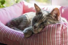 Lustige schläfrige Katze im weichen Kasten lizenzfreie stockfotos