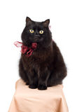 Lustige schwarze Katze, die roten Bogen trägt Lizenzfreie Stockfotos