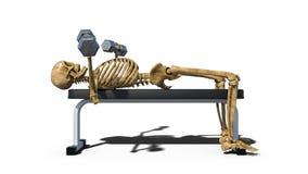 Lustige skeleton anhebende Gewichte auf Bank, das menschliche Skelett, das auf weißem Hintergrund, Seitenansicht trainiert, 3D üb vektor abbildung