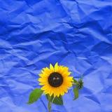 Lustige Sonnenblume Stockbilder
