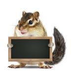 Lustige Tafel des Streifenhörnchengriff-freien Raumes, lokalisiert auf Weiß Lizenzfreies Stockfoto