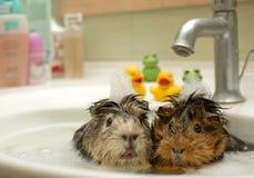 Lustige Tiere Lizenzfreie Stockfotos