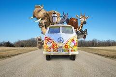 Lustige Tiere der wild lebenden Tiere, Autoreise, Ferien lizenzfreies stockbild