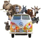 Lustige Tiere der wild lebenden Tiere, Autoreise, lokalisiert stockbild