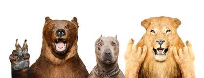 Lustige Tiere, die Gesten zeigen stockfotografie