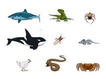 Lustige Tierfarbe Stockfotos