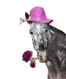 Lustige und freundliche Pferdedame, die Frühjahrgrüße gibt Stockfotografie