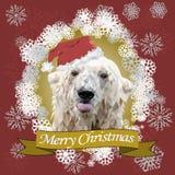 Lustige Weihnachtskarte mit einem polygonalen Porträteisbären, der Zunge im Santa Claus-Hut zeigt Stockbild