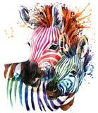 Lustige Zebraillustration mit Spritzenaquarellbeschaffenheit Regenbogenhintergrund f vektor abbildung