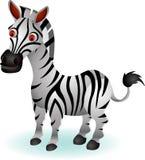 Lustige Zebrakarikatur Lizenzfreies Stockfoto