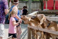 Lustige Ziegen und Leute an einem Streichelzoo Stockfotografie