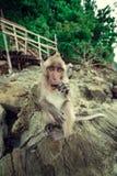 Lustiger Affe. Stockbild