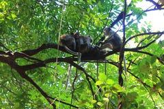Lustiger Affe auf dem Baum im Wald Lizenzfreie Stockfotografie