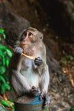 Lustiger Affe bei Tiger Cave Temple, Krabi Stockbilder