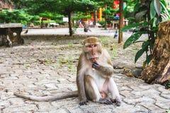 Lustiger Affe bei Tiger Cave Temple, Krabi Stockfotografie