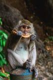 Lustiger Affe bei Tiger Cave Temple, Krabi Lizenzfreie Stockfotos