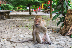 Lustiger Affe bei Tiger Cave Temple, Krabi Lizenzfreie Stockfotografie