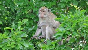 Lustiger Affe in den Bäumen Stockfotografie