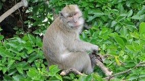 Lustiger Affe in den Bäumen Lizenzfreie Stockfotografie