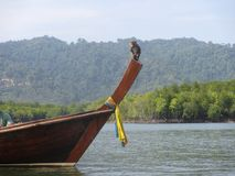 Lustiger Affe, der auf Boot des langen Schwanzes, Koh Lanta, Thailand siiting ist Stockfotos