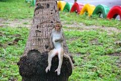 Lustiger Affe, der auf einem Baum sitzt Lizenzfreies Stockbild